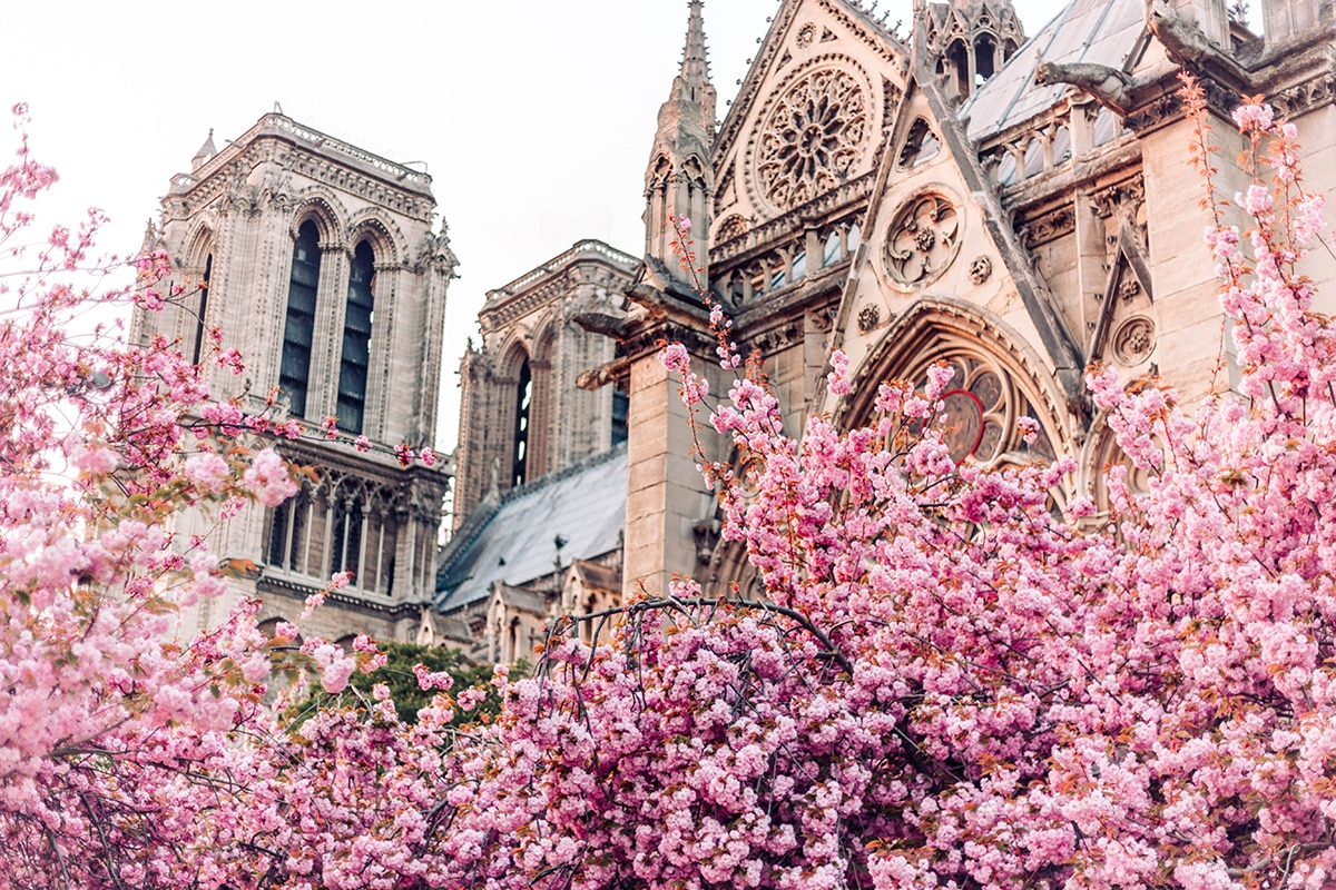 notre dame in bloom LEMONICAL